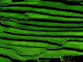 look at the above photo of an inca hillside farm see the